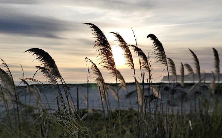 코로나도 해변