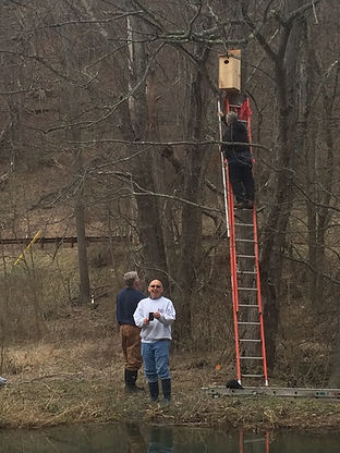 Jim_Volunteers Installing Wood Duck Box.