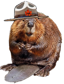 Beaver Design 2-page-002.png
