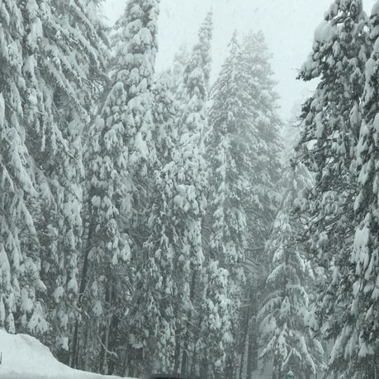 Winter wonderland....so pretty!_BUT left the house at 9_30am...jpg