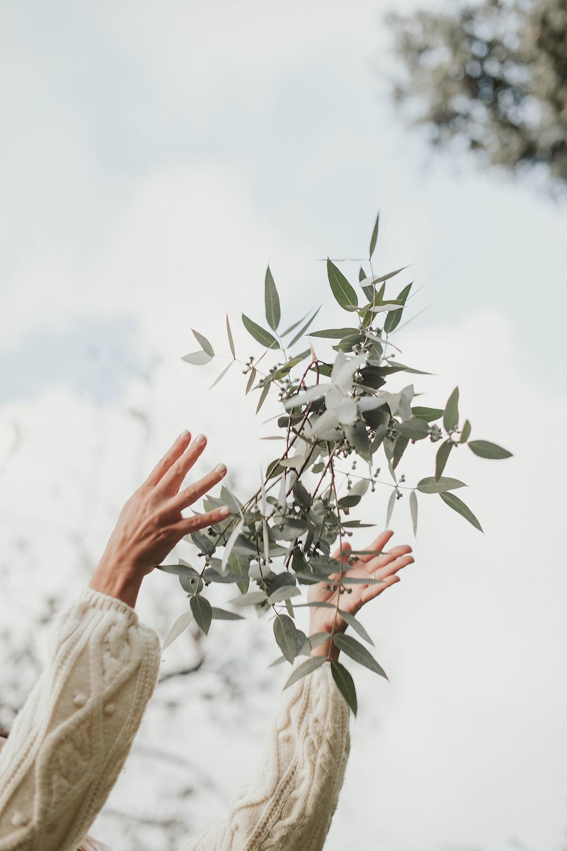 Eucalyptus sanación, propiedades del eucalyptus, despejar las vías respiratorias