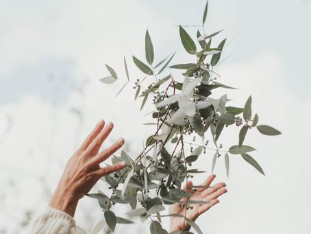4 formas de usar Eucalyptus en casa