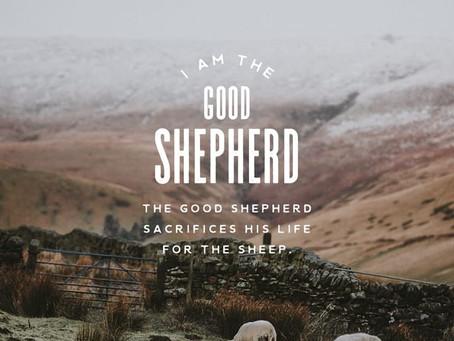 Sheep to Shepherd