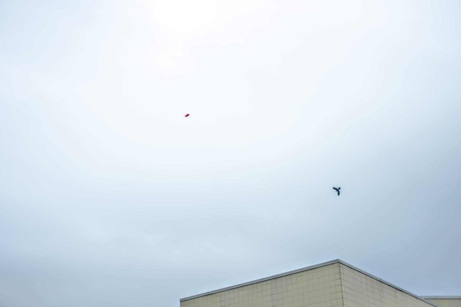 Bird and Balloon