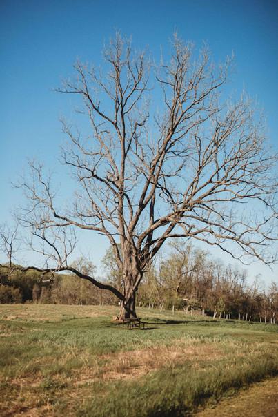 Social Distant Tree
