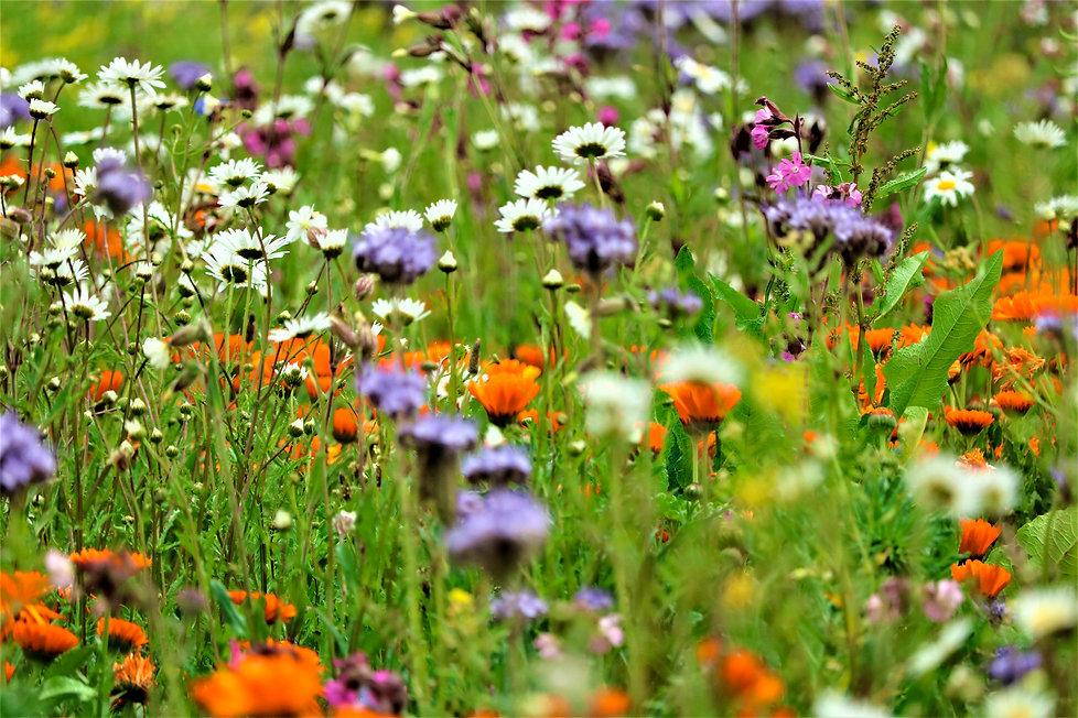 Wildblumen und frisches Gras in der blühenden Natur