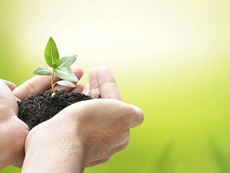 La importancia de las plantas en tiempos de cuarentena