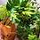 costilla de adan planta de interior mediana