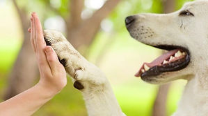 animal-e1562872140887.jpg