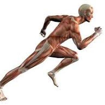 Quatro adaptações adicionais ao treinamento aeróbico