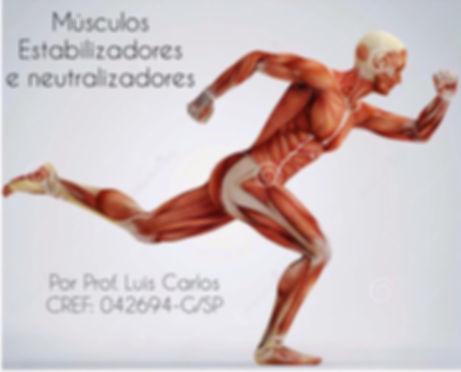 Músculos: Estabilizadores e neutralizado