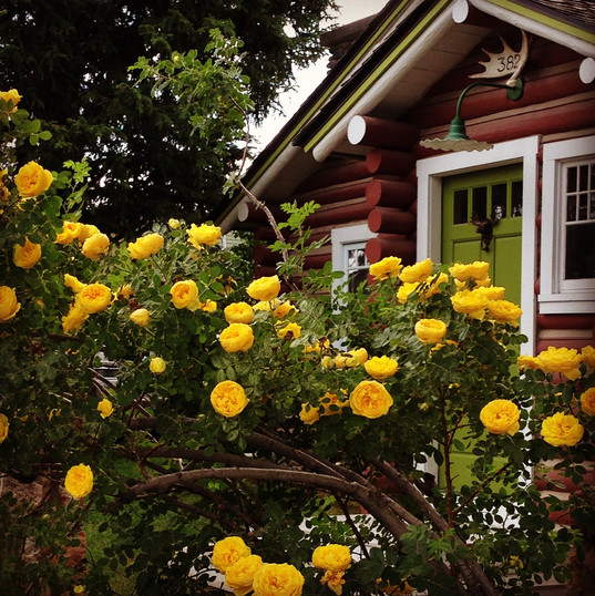 Town cabin with wild roses~