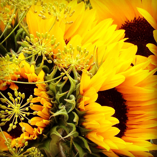 late summer sunflowers~