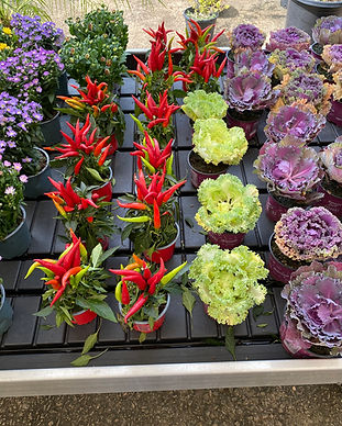 newly arrived flowers and plants 3.jpg