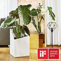 Lechuza Award-winning Design.jpg