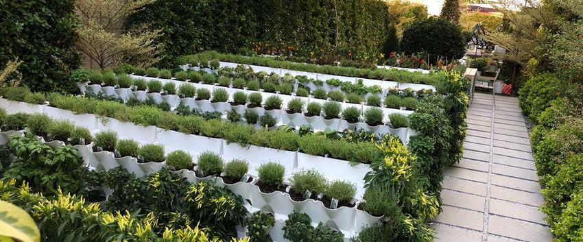 Caballo Living Garden Design and Build 4