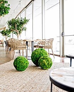 preserve plants 3.jpg