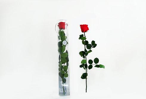 Verdissimo Premium Rosa Preservada
