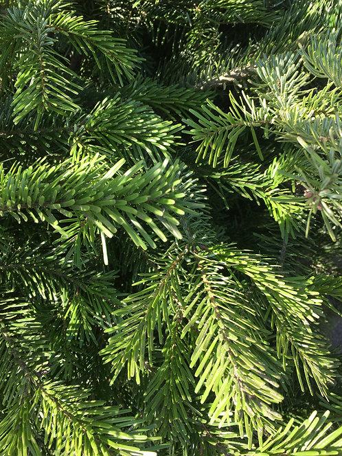Christmas tree - Picea omorika 190 cm