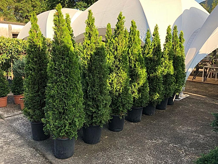 Caballo Living Trees and Plants Service