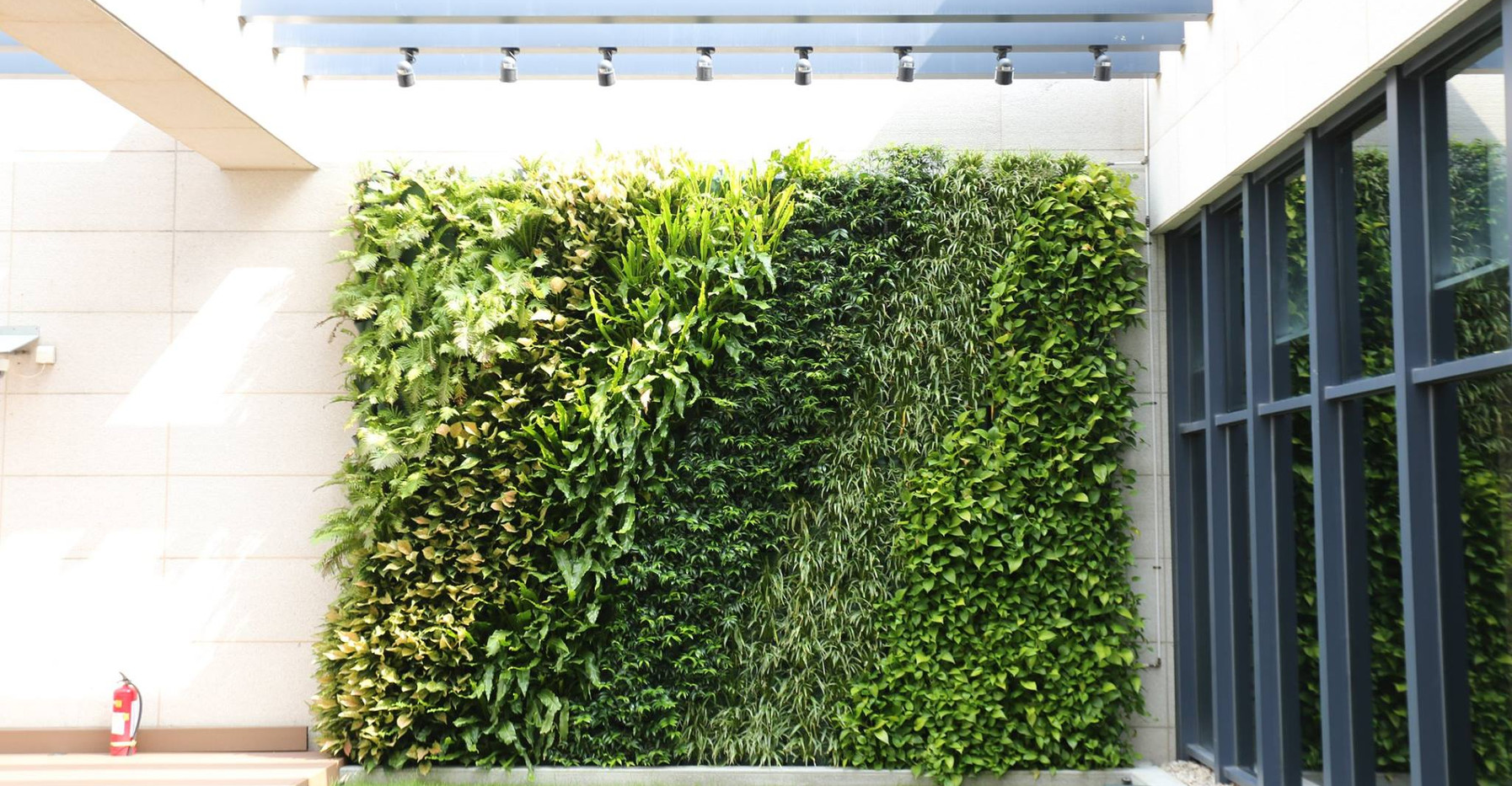 green_wall.jpg