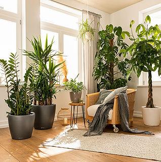 Brand - Lechuza planters.jpg