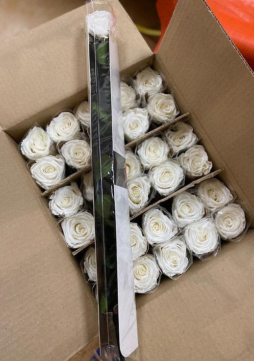 Preserved flower Amorosa standard Vrac/bulk