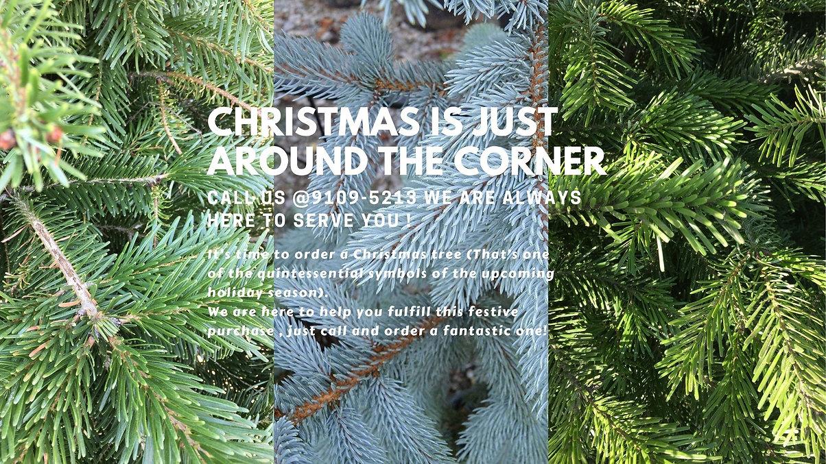 Christmas_tree_pre-order_2021.jpg