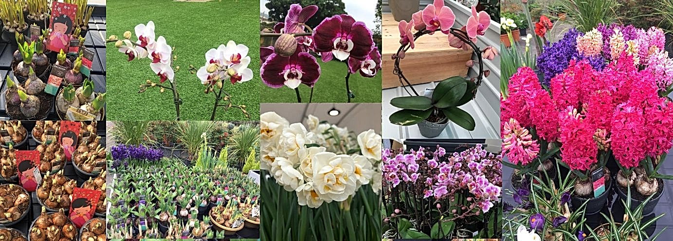 Lunar New Year Flower Market v2.jpg