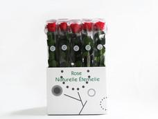 red rose 3.jpg