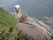 vautours_fauve.jpg
