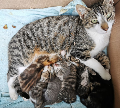 Chatte et ses chatons