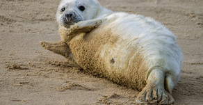 A Day Out With The Seals At Horsey - Or, How To Beat The Wedding Day Blues