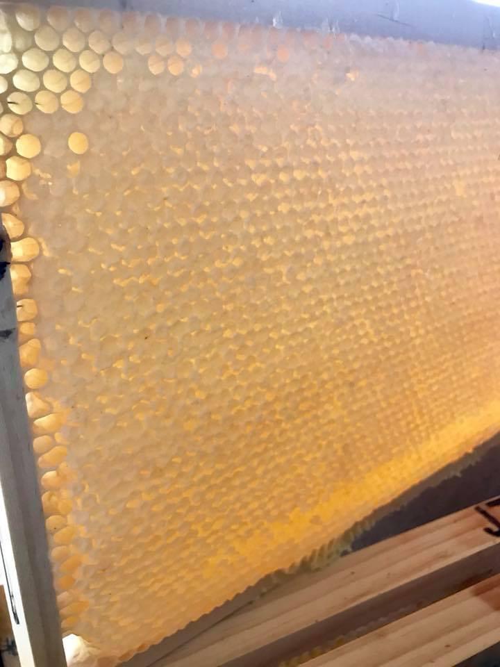 Honey 5.jpg