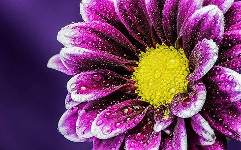 purpledaisymediumlifeactivation.jpg