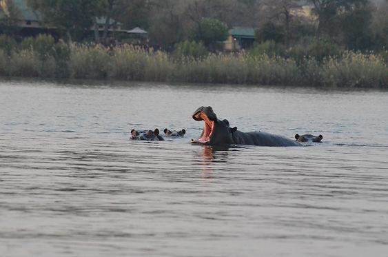 Zambevi River.JPG
