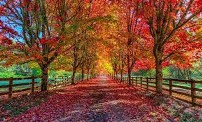 Fall 2021 Road Photo.jpg