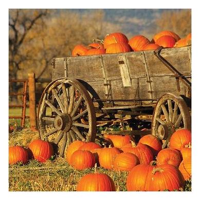 Pumpkin Patch Wayfair.jpg