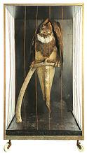 Gryphus gryphus (Urgrib) 75 ppi.jpg
