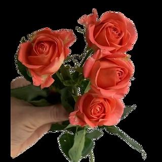 orange spray roses