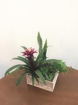 Live plant box
