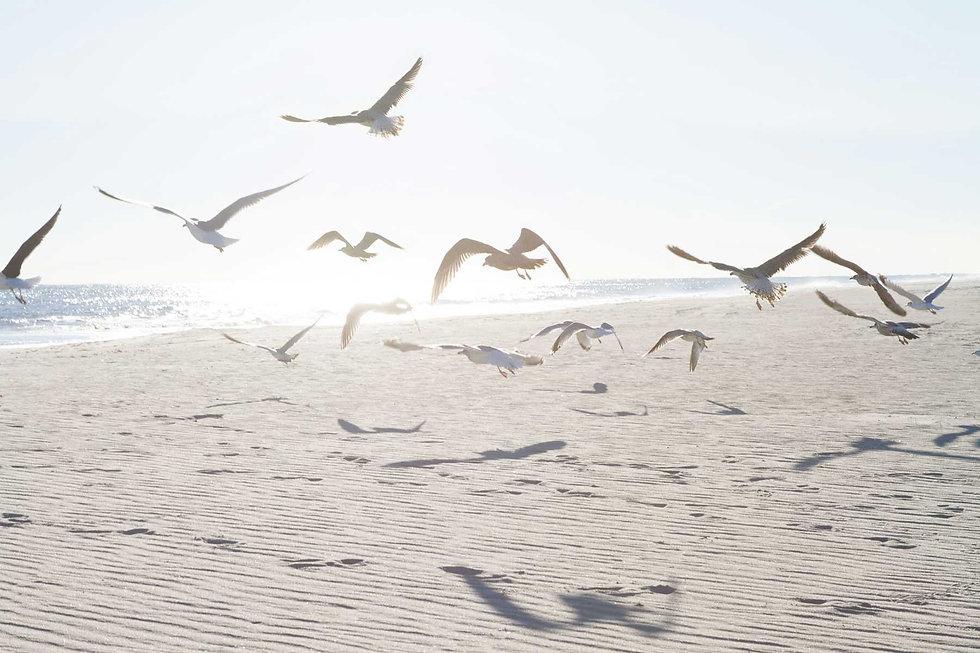 sophie-mclean-ocean-birds.jpg
