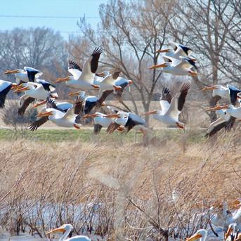 Birding Lucas County