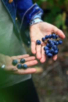 Vin Bordeaux Superieur La Faviere