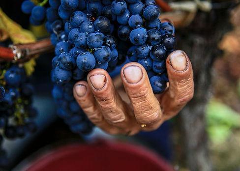 Heritage de grand savoir faire de vignoble