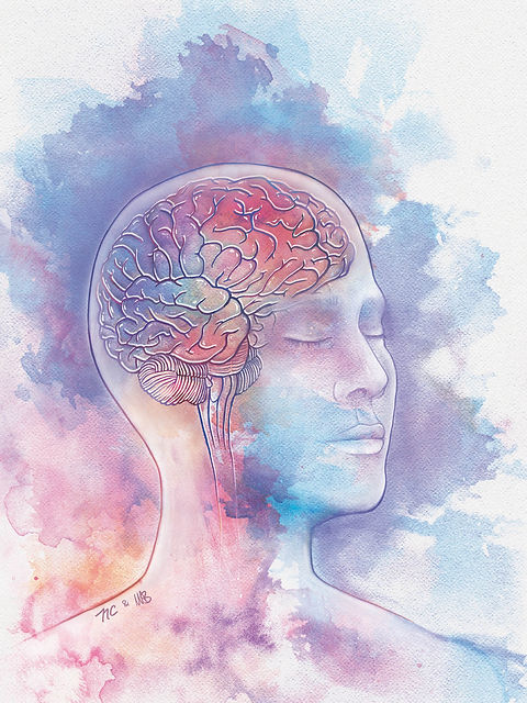 TN2018 Neuroanatomy Photoshop Painting