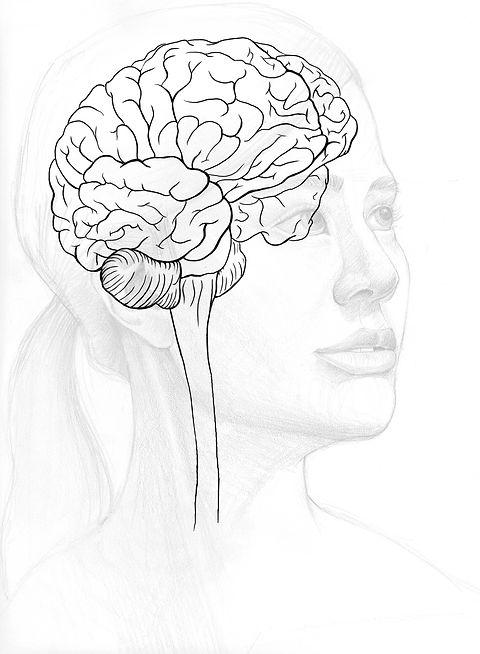 TN2018 cover illustration sketch brain