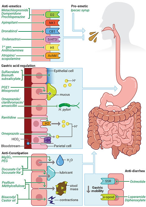 digestive system drugs diagram