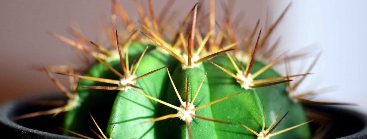 thumbnail_cactusFBcouverture.jpg