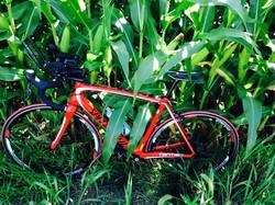 The corn fields of Northampton County